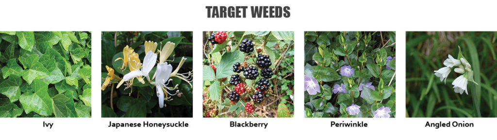 Target weeds include Ivy, Japanese Honeysuckle, Blackberry, Periwinkle and Angled Onion.